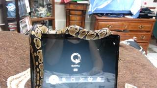 Snake Wants Attention