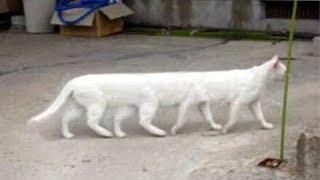 「猫かわいい」 すごくかわいい子猫 - 最も面白い猫の映画 #272