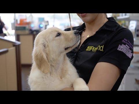 Puppy for a Lifetime Program   Petland Florida