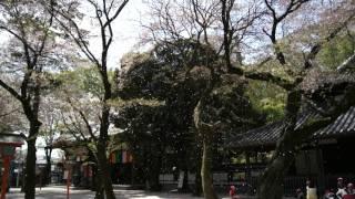 花見、日本2011