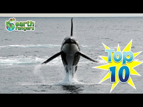 Top 10: Marine Animals we're Protecting in Earth Month 2017!
