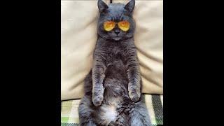 Кот в сапогах! Ржака))) Видео про кошек! Кот танцует в платье и в ботинках! Гостиница для животных#