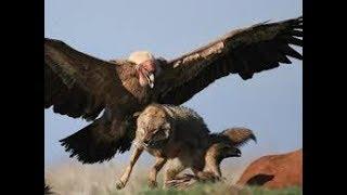 Хищные птицы, совы, куриные. Биология 7 класс