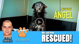 Hope Rescues Scared Dog Named Ángel - @Viktor Larkhill Extreme Rescue