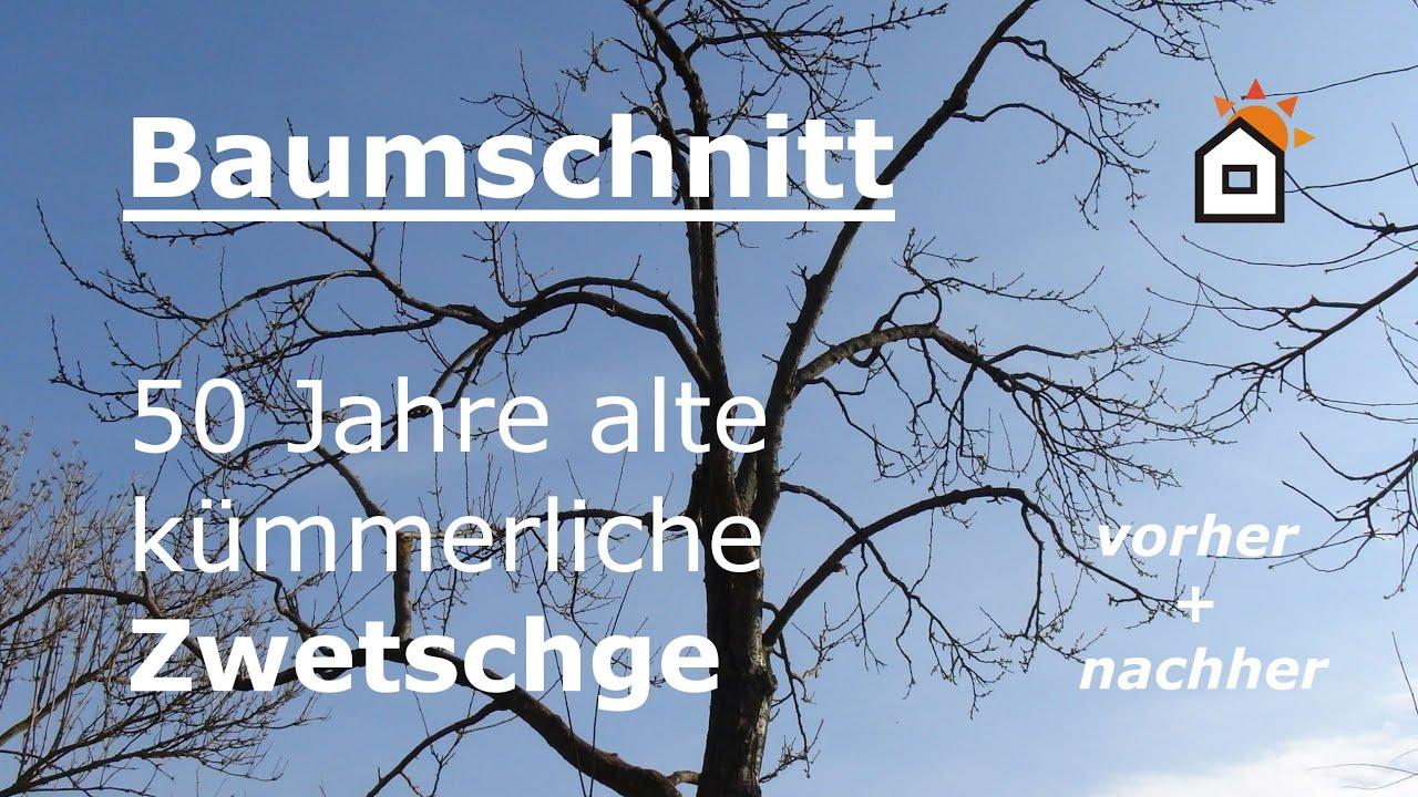 Favorit Baumschnitt: Zwetschge Hochstamm 30 Jahre - vorher & nachher - YouTube OD68