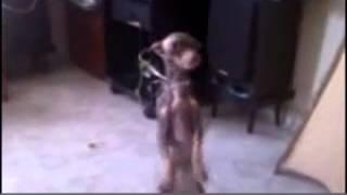 топ 10 танцующих животных