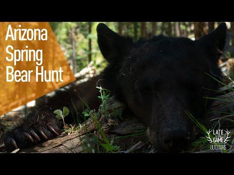 Arizona Bear Hunt (2021 Spring Bear)
