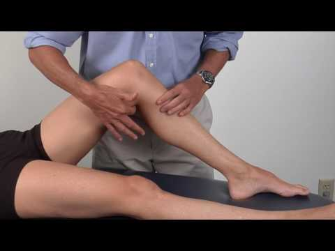 Anterior Knee Muscles