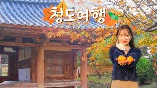 가을에 청도 가봤어?! 떠오르는 경북여행지 청도 VL…