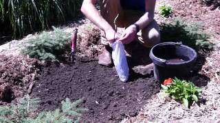 How to Plant Lilac Plants