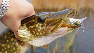Выход зачётных щук на Kosadaka Inborn 75F Рыбалка на живописном озере День 2