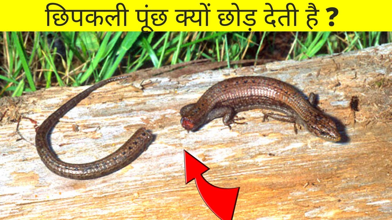 Download 99 % लोग ये बातें नहीं जानते / MOST interesting FACTS about the WORLD