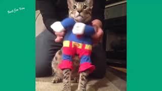 Fanny cats sing new years!Кошки поют Забавные кошки
