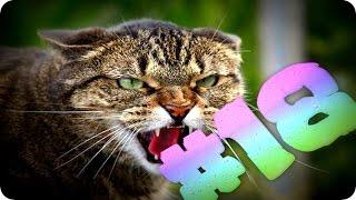 Приколы с животными №18   Кричащие коты  Смешные животные  Animal videos
