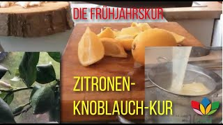 RAPHA'elle Zitronen Knoblauch Frühjahrs Kur