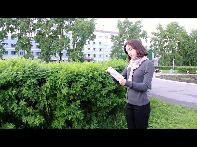 Изображение предпросмотра прочтения – АленаПостникова читает произведение «Пчелы» А.А.Фета