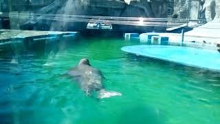 Ижевск зоопарк 9