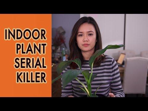 Indoor Plant Serial Killer