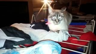 Le chat VS le rack à linge | Cat Vs drying rack
