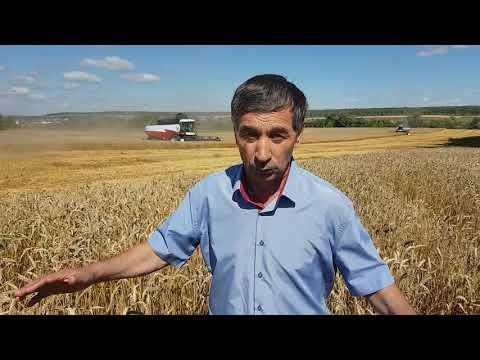 В.Д.Козлов КФХ из с.Тагай Майнского района: о хозяйстве, жизни, хлебе