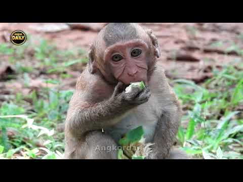 Unfortunate for Sweetpea and one boy Monkey are Sad from Mum/ Cry Guys Angkordaily 3