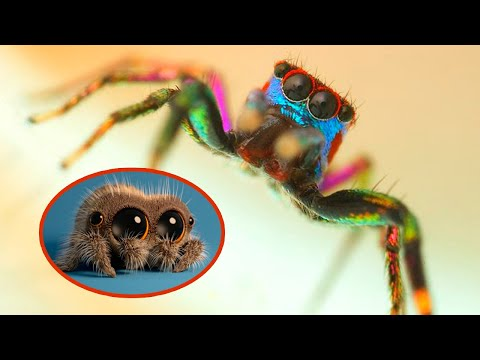 The CUTEST SPIDERS In The World Part #02