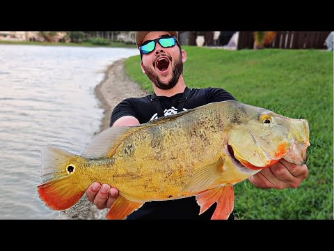 Catching GIANT Peacock Bass In MIAMI FL! ( Ft. Flair & Peric)