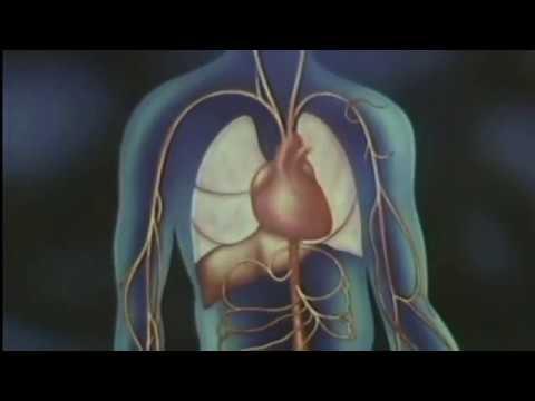 Das menschliche Herz - YouTube