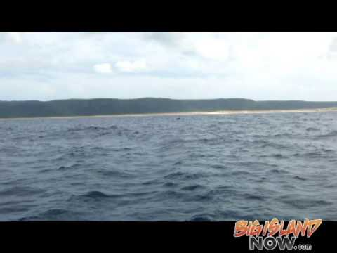 NOAA Ship Hu'ialakai Spots First Whale 2015-2016 Season