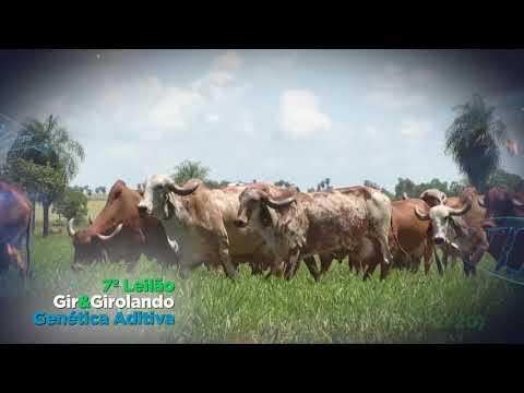 7º Leilão Gir & Girolando Genética Aditiva