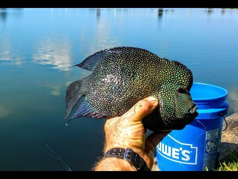 🐟  Fishing For World Record Trophy Texas Rio Grand Cichlids.   World Record Caught And RELEASED!