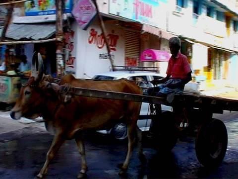 Rameshwaram Streets, Tamilnadu