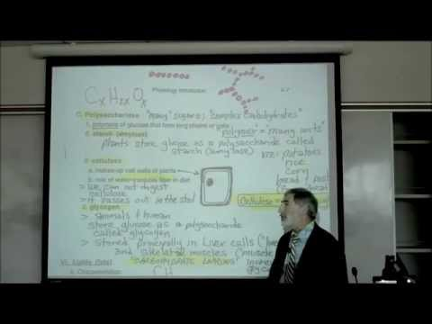 CARBOHYDRATES & LIPIDS by Professor Fink
