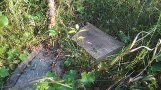 Сажаю косточки сливы в открытый грунт под зиму на Урале