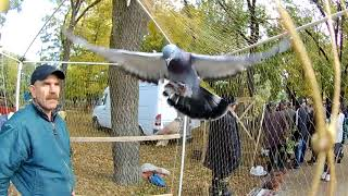 Выставка птиц Мелитополь 14 10 17 г