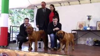 Vii° Raduno Italiano Dogue De Bordeaux(2/2)