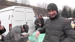 Выставка голубей в Токмаке, март 2016 г.(19 марта 2016 года в городе Токмак Запорожской области состоялась выставка голубей. В ней приняли участие..., 2016-03-19T15:58:25.000Z)