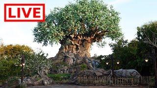 🔴 LIVE:  Disney's Animal Kingdom 20th Anniversary! || Opening Ceremony, Merchandise & More!