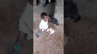 MOTINA BABY AND DOG