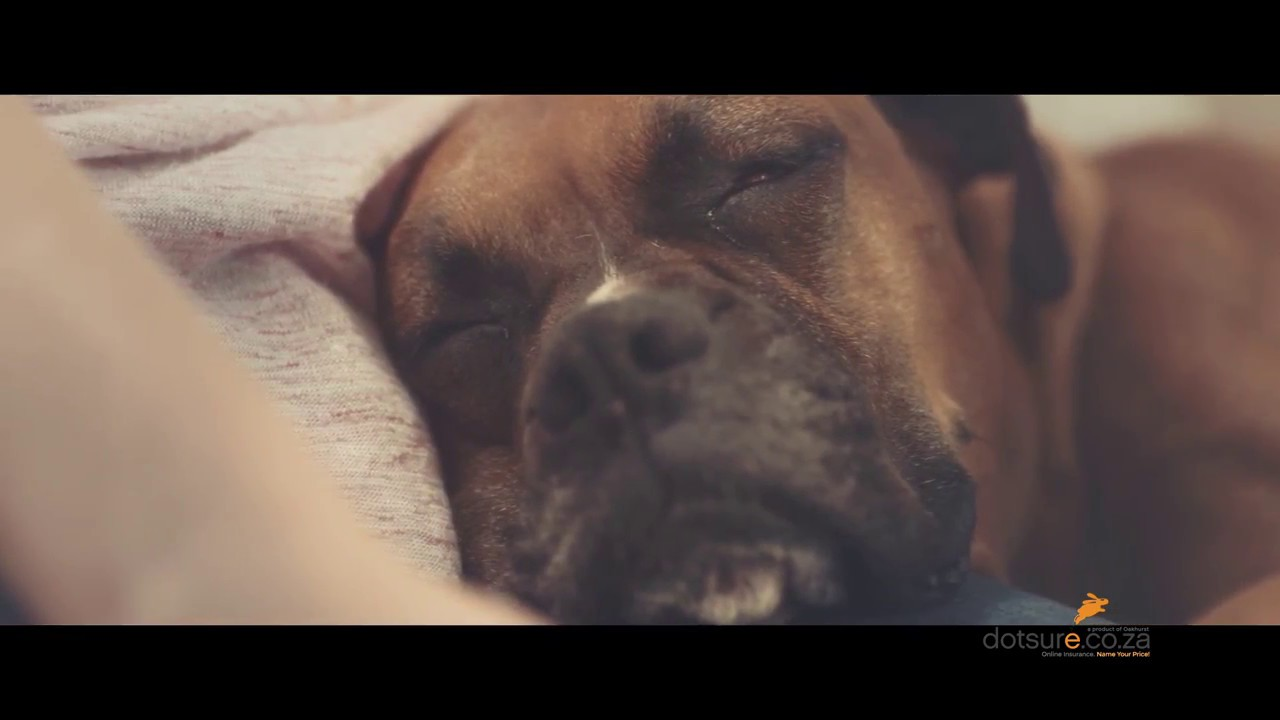 dotsure.co.za   Pet Insurance   Boxers