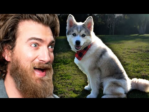 Reacting To Cute Puppy Videos
