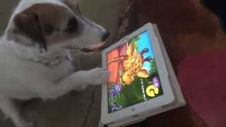 Dog Plays on IPad - Jesse the Jack's ABC Zoo App Release!
