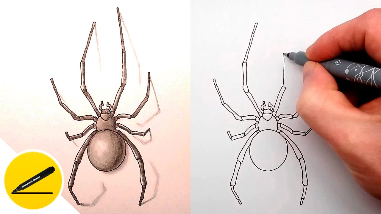 Uncategorized How To Draw Spiders how to draw a spider step by drawing tutorial video youtube video