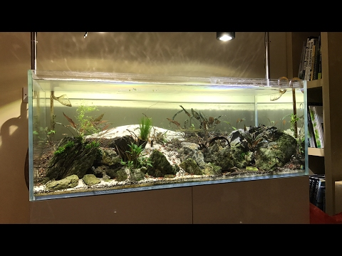 LIVE Why this aquascape looks so bad!!!