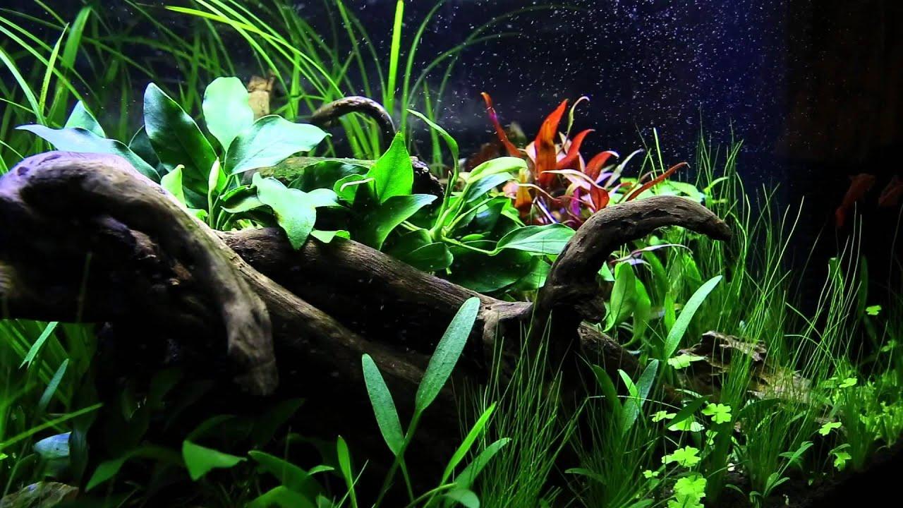 Superfish aquarium fish tank aqua 60 - Superfish Home 60 Week 3