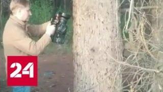 Экологи отмечают нашествие сибирского шелкопряда в Томске - Россия 24
