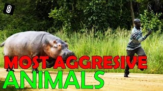 Most Aggressive Animals on Earth #TheGep
