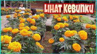 Lagu lihat kebunku | @Marsa Misha di kebun bunga Rumah Astiri Indonesia | Lagu Anak Indonesia