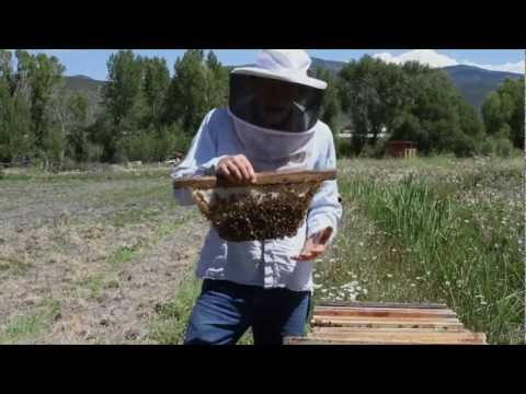 Top Bar Beekeeping With Les Crowder And Heather Harrell (DVD) Trailer