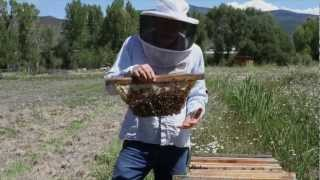 Top-Bar Beekeeping with Les Crowder and Heather Harrell (DVD) Trailer